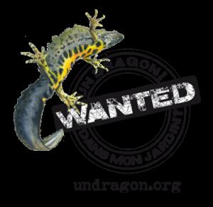 Echappée Nature nocturne à la découverte des dragons de Bois Mou ! @ Bois Mou | Cravans | Nouvelle-Aquitaine | France