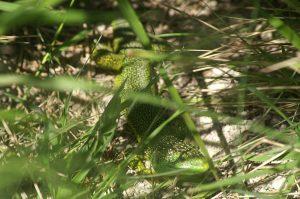 Echappée Nature au Coteau aux orchidées @ coteau aux orchidées | Saint-Maurice-de-Tavernole | Nouvelle-Aquitaine | France