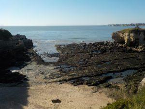 Découverte du littoral à marée basse - conche de Saint Sordelin - Vaux sur mer @ conche de Saint Sordelin | France