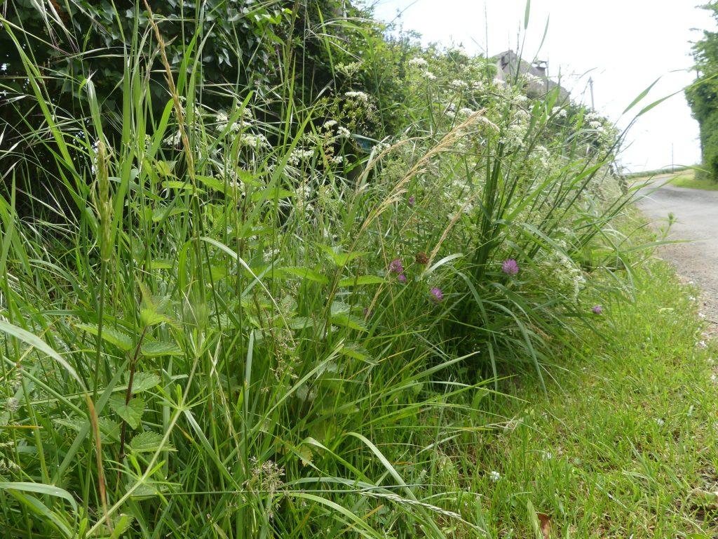 Plantes Pour Talus Sec vive les plantes sauvages sur nos talus et nos trottoirs