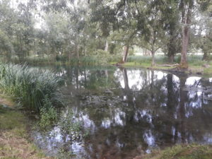 Balade Nature, les bords de Seugne à Jonzac et leur biodiversité @ Jonzac, Pont de la Traine | Jonzac | Nouvelle-Aquitaine | France