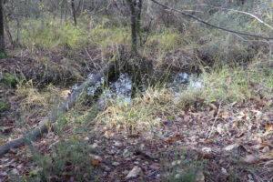 Echappée Nature à la découverte de Bois Mou @ Bois Mou | Cravans | Nouvelle-Aquitaine | France